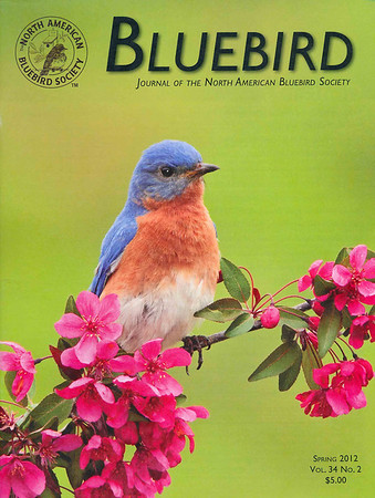 """<div class=""""jaDesc""""> <h4>North American Bluebird Society </h4> <h4> BLUEBIRD Journal Cover Photo - Spring 2012 </h4> <p> </p> <p> This was my best Bluebird photo of 2011.  He and his mate had 2 clutches for a total of 9 baby Bluebirds.  I was delighted to see his portrait on the cover of a journal dedicated to Bluebirds.</p></div>"""