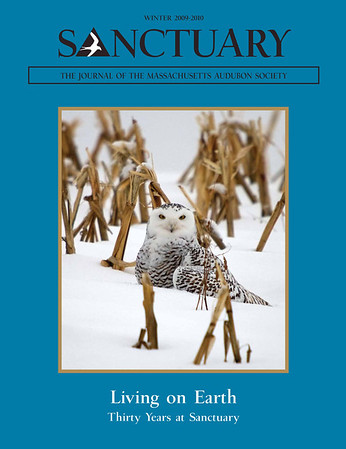 """<div class=""""jaDesc""""> <h4> SANTUARY Journal Cover Photo - Winter 2009-10 </h4> <p> It was a real honor to have my female Snowy Owl photo selected to be on the cover of the Massachusetts Audubon Society's 30th Anniversary edition. </p> </div>"""