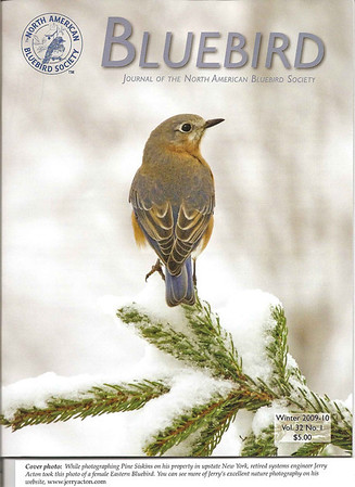 """<div class=""""jaDesc""""> <h4> BLUEBIRD Journal Cover Photo - Winter 2009-10 </h4> <p> The editor said they had never selected a female Bluebird for their cover.  My photo of this female Bluebird on a snowy evergreen tree was their first.</p> </div>"""