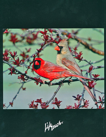 """<div class=""""jaDesc""""> <h4> Newark Valley Middle School Yearbook Back Cover Photo - 2011-2012 </h4> <p> The Newark Valley Middle School decided to have this spring Cardinal courtship photo on their back cover.  The Cardinal is their mascot.</p> </div>"""