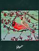 "<div class=""jaDesc""> <h4> Newark Valley Middle School Yearbook Back Cover Photo - 2011-2012 </h4> <p> The Newark Valley Middle School decided to have this spring Cardinal courtship photo on their back cover.  The Cardinal is their mascot.</p> </div>"
