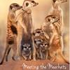 AfricaMeerkats-1