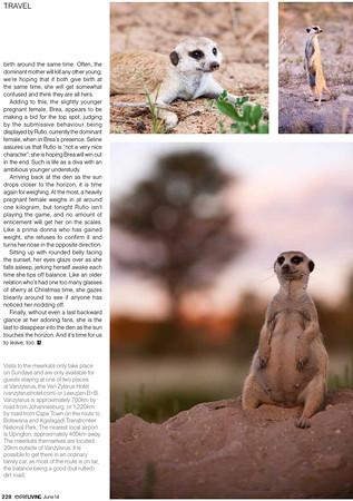 AfricaMeerkats-4