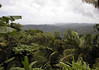 El Yunque National Forest - to Bahia Las Cabezas (Bay of Heads) - the northeastern most point of Puerto Rico