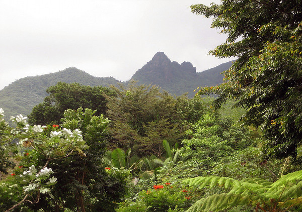 Beyond the rain forest in El Yunque National Forest - up to Los Picachos Peak