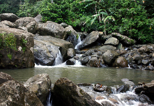 Along the Rio Mina - in the El Yunque National Forest