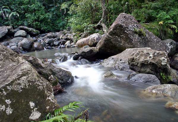 Tropical vegetation along the Rio Mina - El Yunque National Forest - in the Luguillo Mountains - eastern end of Puerto Rico