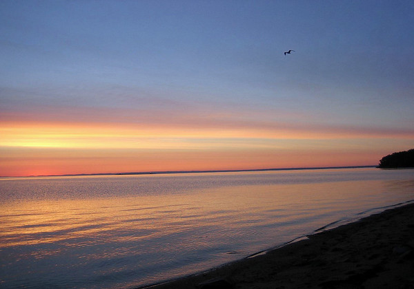 Sunrise at the base of the Sable Dunes - at the Baie du Moulin a Baude - with a gull flying above the St. Lawrence River beyond - Quebec province.