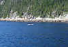 Fluke of a Minke Whale - in the Saguenay River - Saguenay Fjord National Park - Quebec