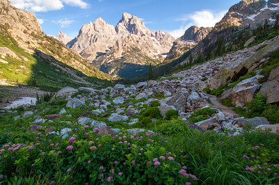 Wildflowers bloom deep in the backcountry of Grand Teton National Park in Wyoming.