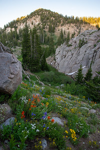 Alpine wildflowers in a cirque in the Wasatch Range in Utah. If you look close there is a moose in the thicket below.
