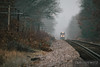 Union Pacific Southern Heritage unit cuts throught the fog as the crew makes their way west towards Altoona, Wisconsin.