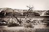 "A dead tree dominates a fairly flat landscape along the BNSF's Orin Subdivision.  Travis Dewitz <a href=""http://www.therailroadcollection.com/latest-works/"" target=""_blank"">The Railroad Collection</a>"