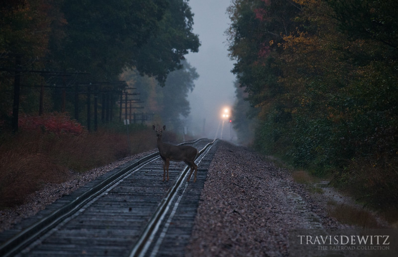 """A whitetail deer watches my every move while the Union Pacific local sneeks up from behind returning to Altoona, WI.  Travis Dewitz <a href=""""http://www.therailroadcollection.com/latest-works/"""" target=""""_blank"""">The Railroad Collection</a>"""