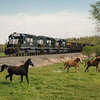 Three horses begin to run as an empty PPLX coal train passes by near Schuyler, Pennsylvania.