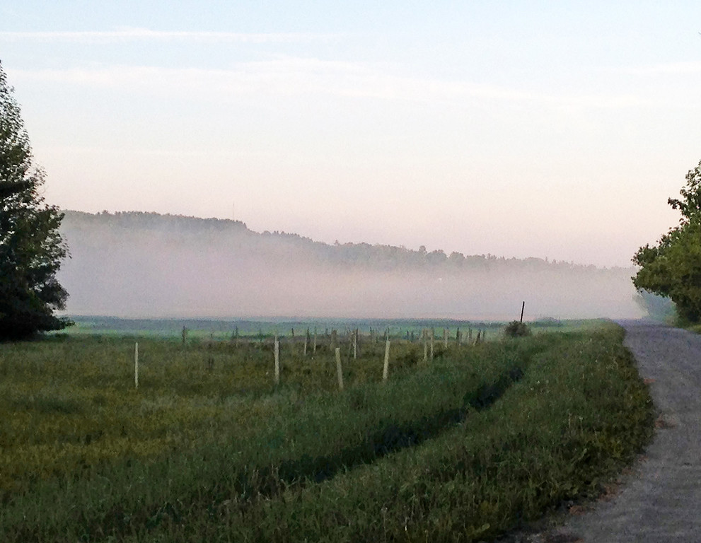 Morning Fog – Trail from Mt. Pleasant to Stevenson Rd. – 5/29/15