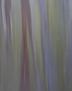 Rainbow Eucalyptus #6