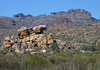 Cederberg Wilderness Area - stretches from the Middleberg Pass at Citrusdal to north of the Pakhuis Pass at Clanwilliam.   This area is part of the Cape Floral Kingdom (1 of 6 biogeographical areas on Earth, and by far the smallest, and the only one contained within a single country), about 70% of the Cape's impressive 9,600 plant species are endemic - this kingdom is also one of South Africa's UNESCO World Heritage Sites (Cape Floral Region).  It is also one of South Africa's 45 Natural Wonders.  The Cederberg Mountain Range is 60 mi. (100 km) long, and is geologically composed of sedimentary sandstone.