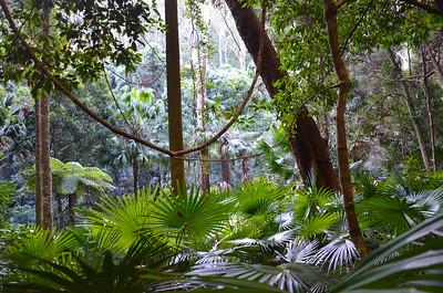 Australian Temperate Rainforest