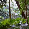 Australian Temperate Rainforest