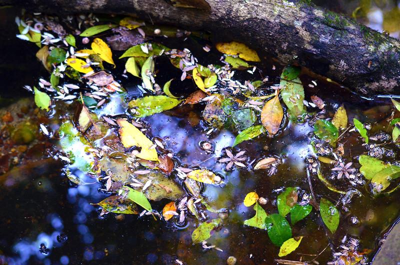 Autumn Rainforest Reflections
