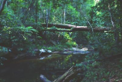 Rainforest Ramblings