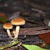 A Family of Fungi