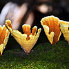 Golden Cups of Forest Fungi