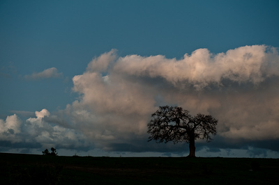 tree eating cloud-34584