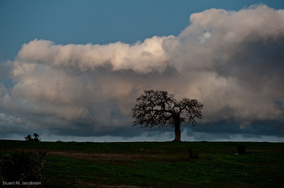 tree eating cloud-34566