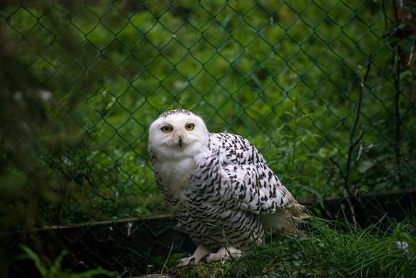 Ranua Zoo