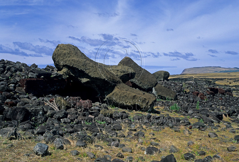 Toppled Moai at Akahanga