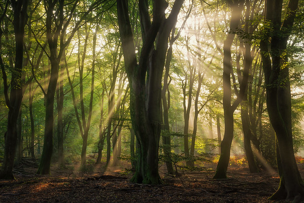 On a sunny morning in the forest