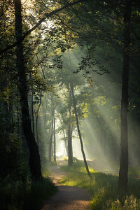 Path of sunrays