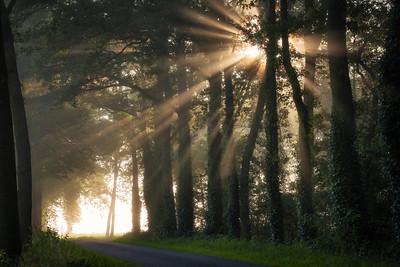 Amazing rays
