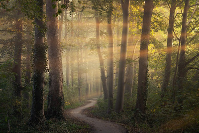 Sunrays at the winding path
