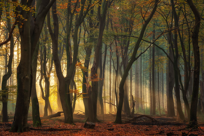 The beauty of forests