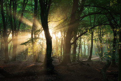 First light in the summer forest