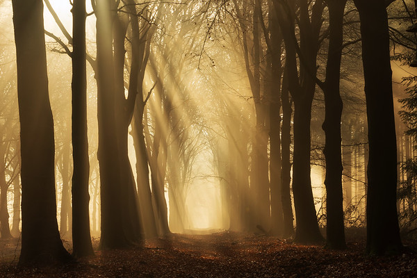 Forest glow