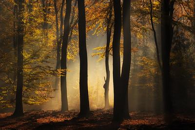 Backlit autumn