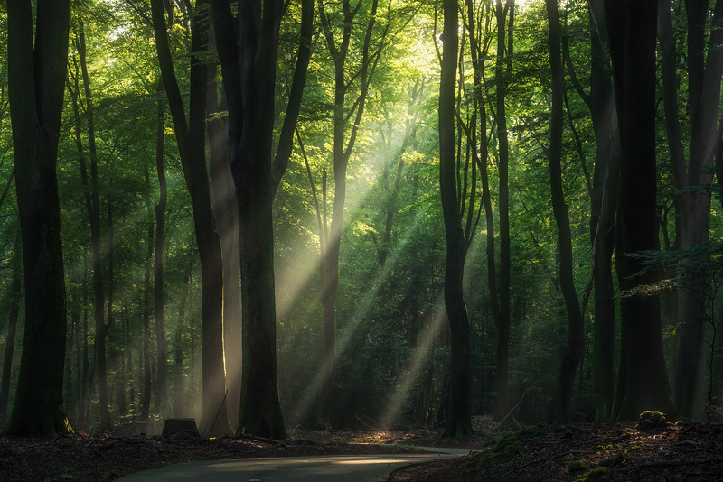 Rays and trees