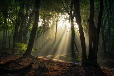 Forest waking up