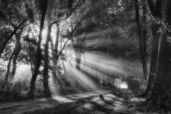 Black and white rays