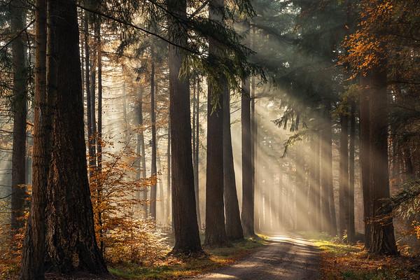 Fresh autumn light