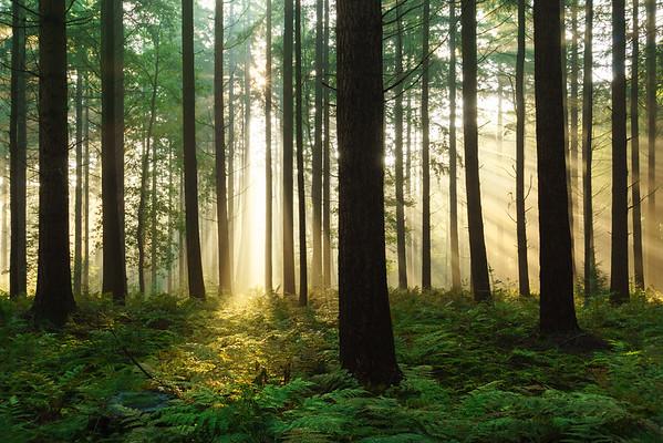 Fresh forest