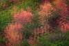 Autumn Impressionism