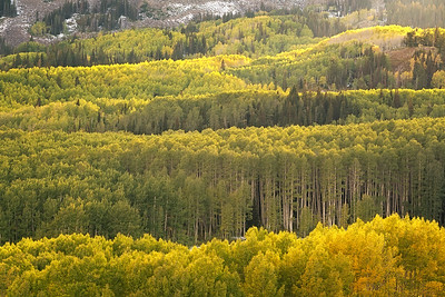 Layers of Aspen and Pine 01
