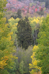 Fall Colors on the Nebo Loop 01