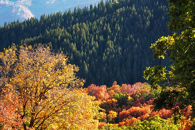Autumn Along Pine Canyon Road 03