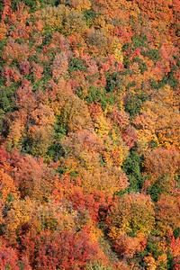 Autumn Along Pine Canyon Road 04
